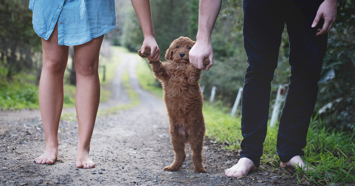 Tired Of Being Asked About Babies This Couple Did A Newborn Photoshoot With Their Dog