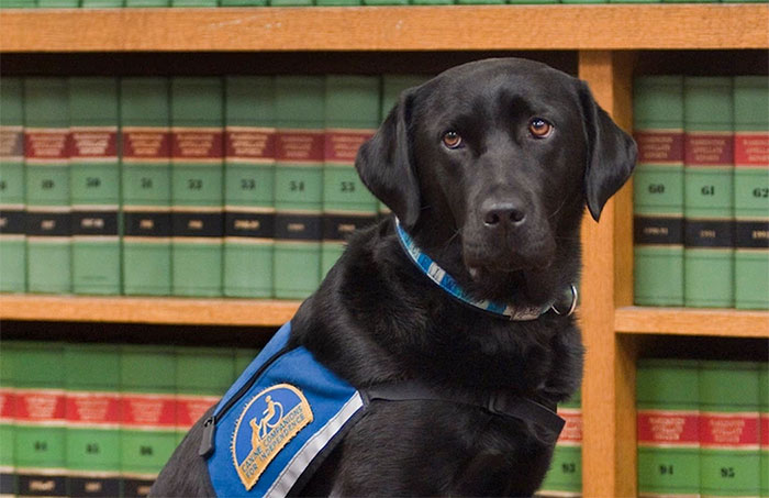 It's Scary To Testify In Front Of Your Attacker In Court, But These Dogs Make It Easier