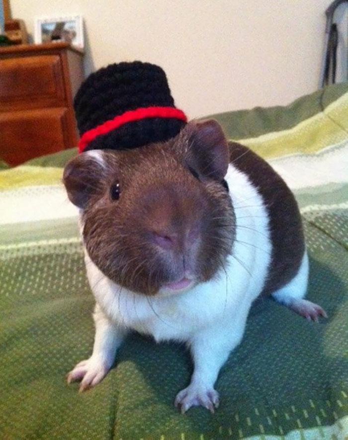 The Gentleman Guinea Pig Hat