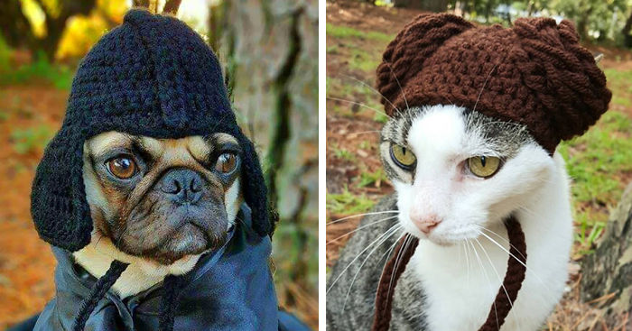 18079f2e131 Artist Crochets Pet Hats And They re Purrfect
