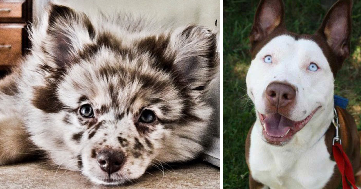 20+ Crossbreed Dogs That Will Make You Fall In Love With Mutts