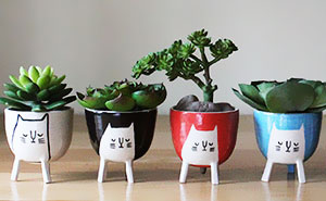 Housewares To Make You Smile By Beardbangs Ceramics