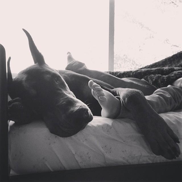 cutie-and-the-beast-dog-girl-seana-doberman-90