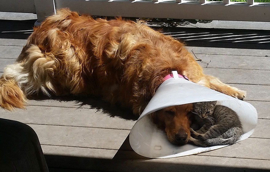 dog-cone-cat-sleeping-shade-friends-1