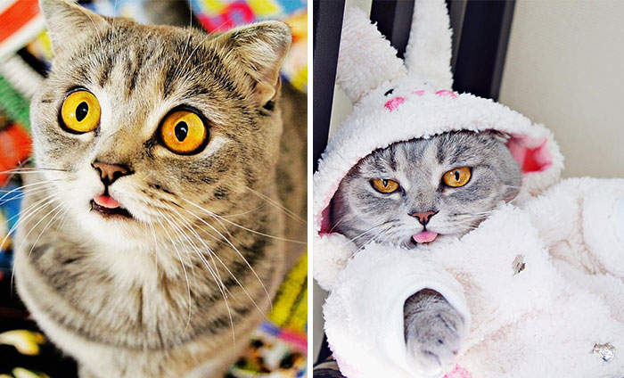 Ridiculously Cute Pics Of The 'Einstein' Cat Who Got Really Grumpy
