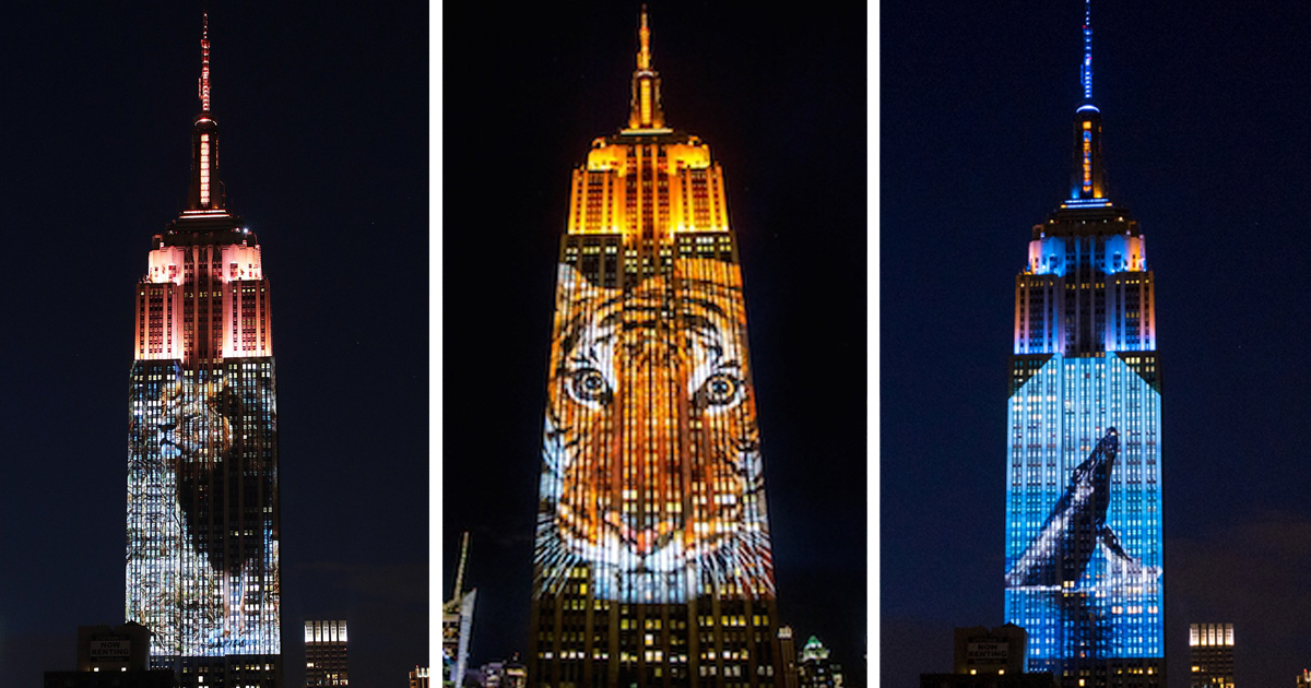 cecil the lion and 160 endangered animals projected on empire state building bored panda. Black Bedroom Furniture Sets. Home Design Ideas