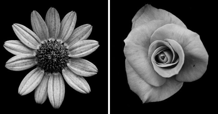 I Take Black & White Photos Of Garden Flowers To Show The ...