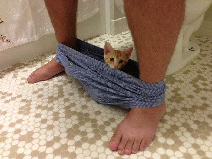 20 Funny Cats That Love To Hang Out In Your Underwear