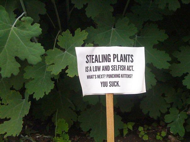 Stealing Plants
