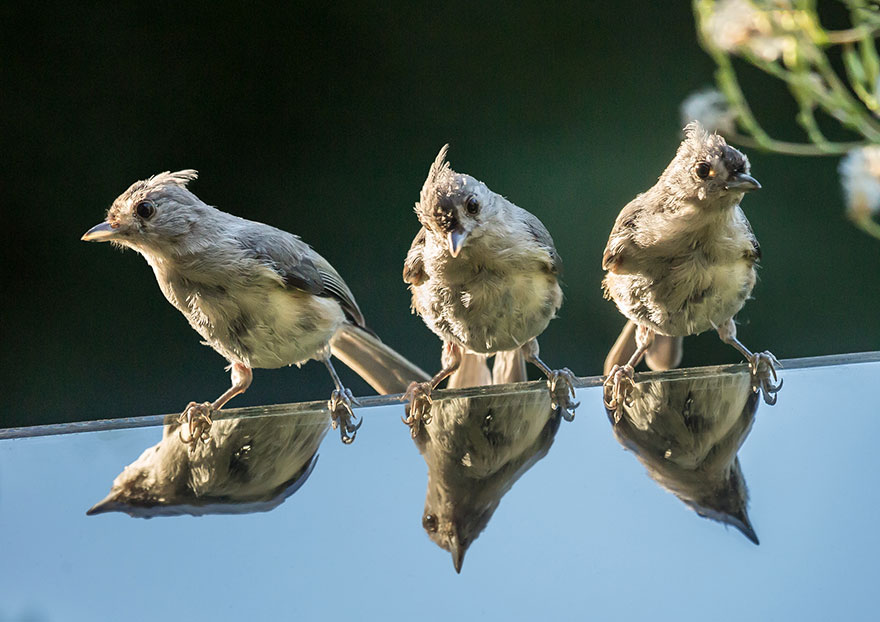 hummingbird-feeder-long-exposure-angled-mirror-10