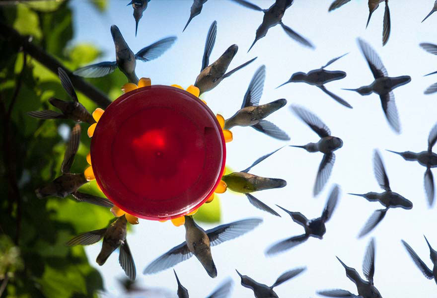 hummingbird-feeder-long-exposure-angled-mirror-3