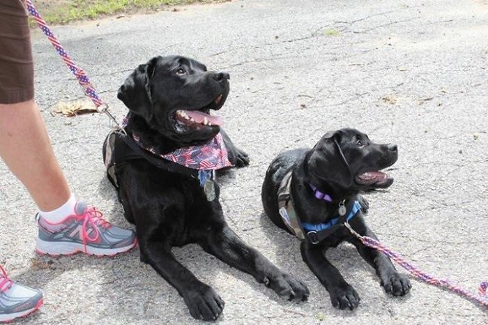 15 собак с очаровательными мини-копиями