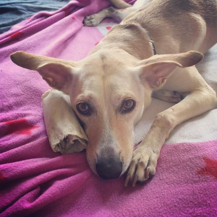 Brooklyn (part Yoda/caribbean Mexican Dog)