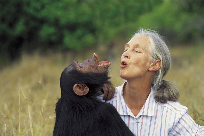 Jane Goodall, Leading Primatologist And Conservationalist