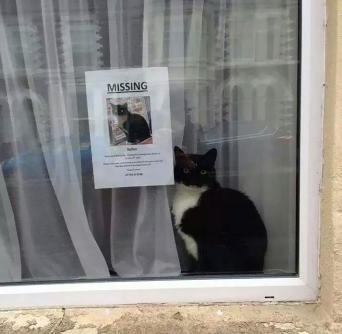 "Missing Cat Found Near His Own ""Missing Cat"" Poster"