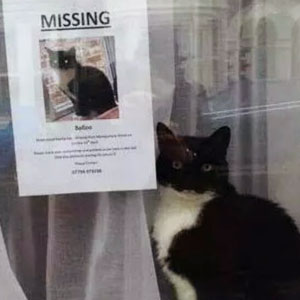 Missing Cat Found Near His Own