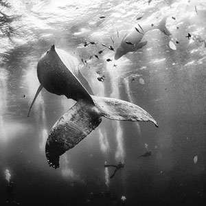 The Winners Of The 2015 National Geographic Traveler Photo Contest