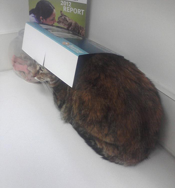 My Cat, Mastermind At Hiding From The Vet