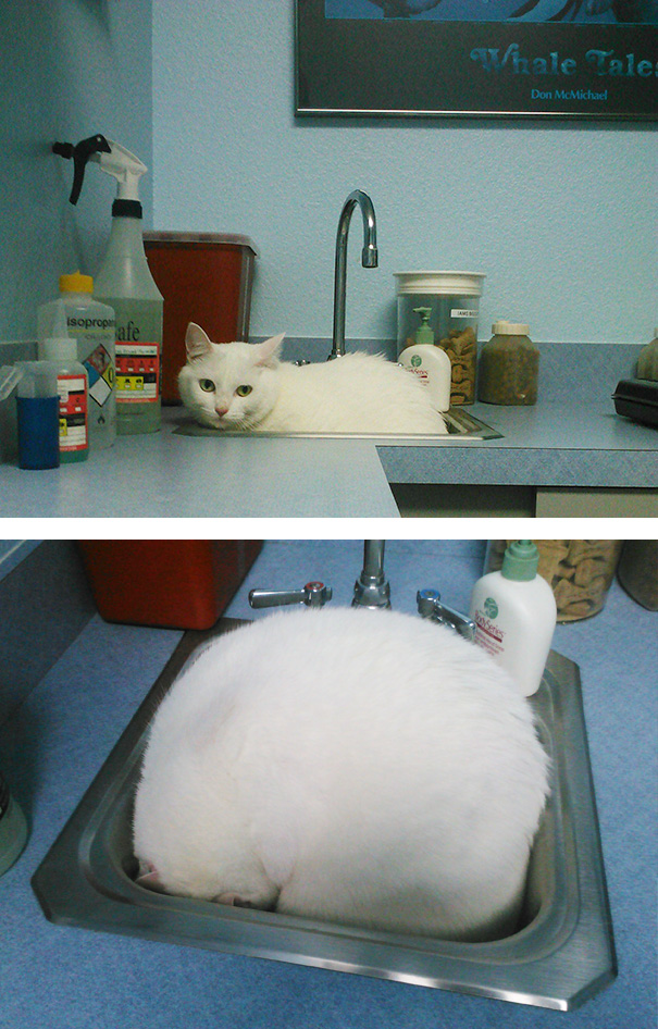 My Cat At The Vet