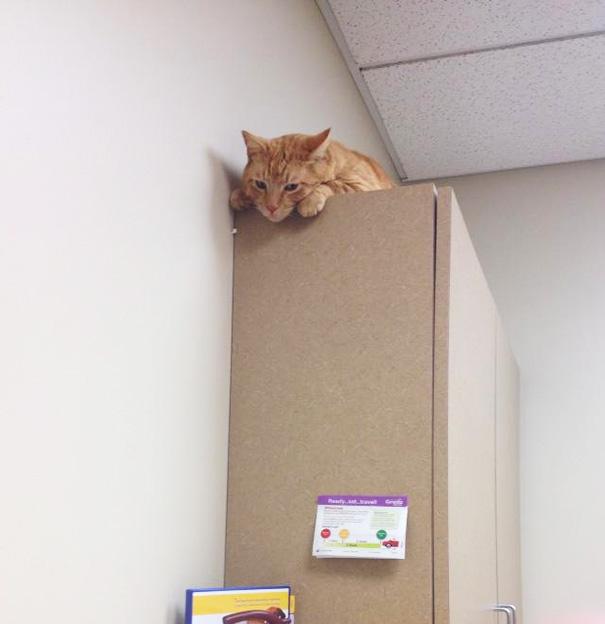 My Boyfriend's Cat Hiding From The Vet