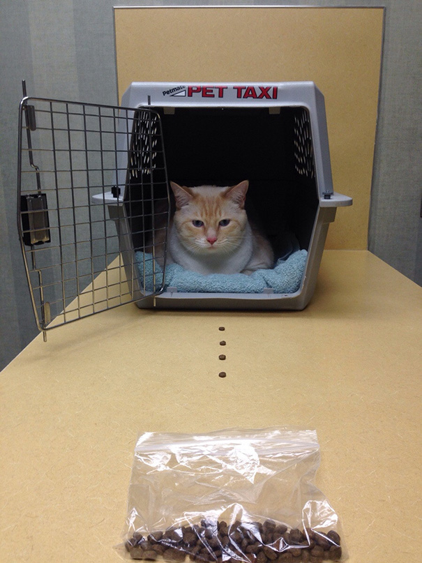 It Took 10 Minutes To Get Him In The Kennel To Take Him To The Vet. Now we can't get him out of it