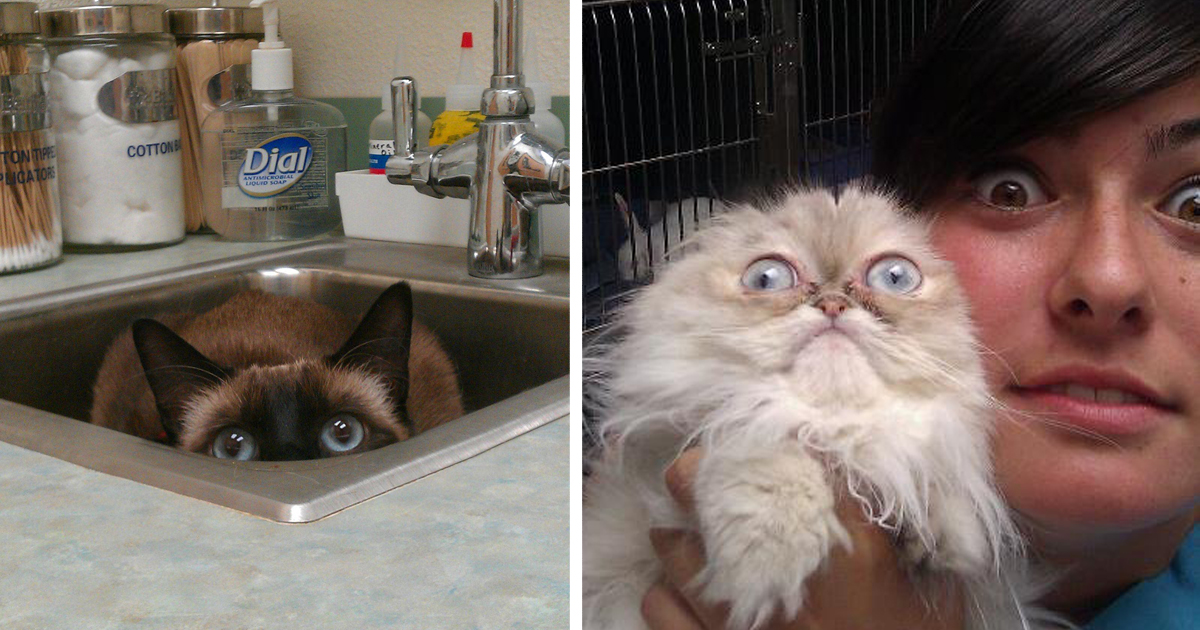 15+ Cats Who Just Realized You Took Them To The Vet