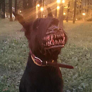 Muzzle For Walking Your Dog In The Woods