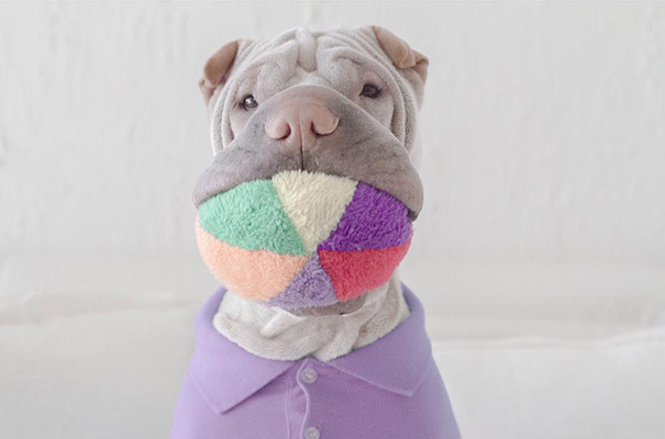 shar-pei-dog-paddington-friend-annie-cat-21