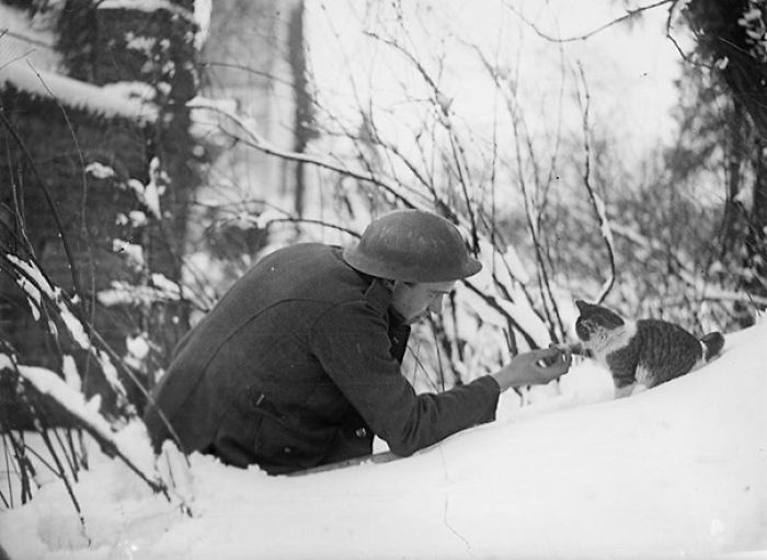 """A British Soldier """"Shakes Hands"""" With A Kitten On A Snowy Bank"""
