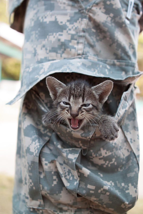 A Kitten Is Nestled In The Trouser Pocket Of A U.S. Soldier
