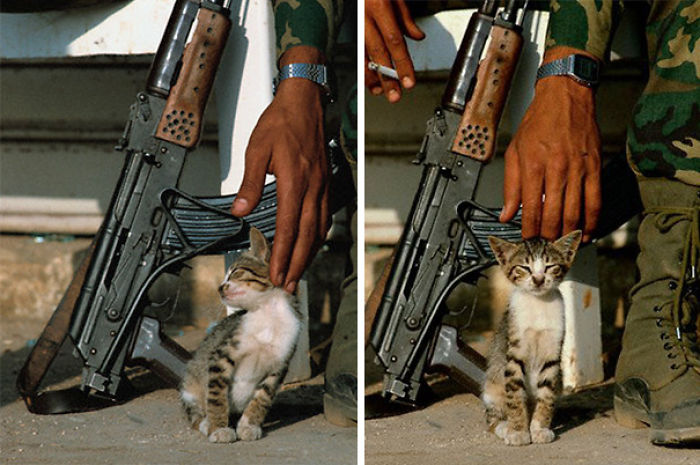 Palestinian Soldier Stroking A Kitten