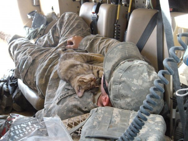 Stray Kitten Sleeping On My Buddy, Afghanistan 2009