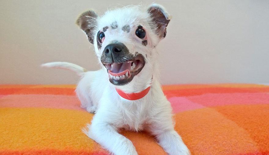 strange-puppy-lucky-hssv-adopt-christine-doblar-1