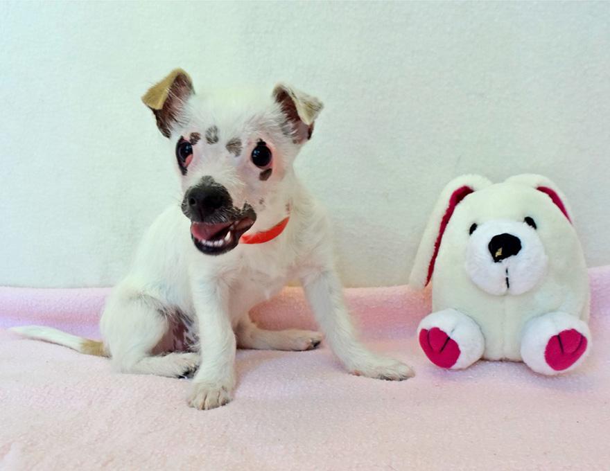 strange-puppy-lucky-hssv-adopt-christine-doblar-2