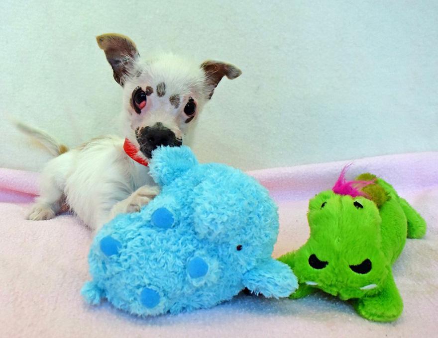 strange-puppy-lucky-hssv-adopt-christine-doblar-3