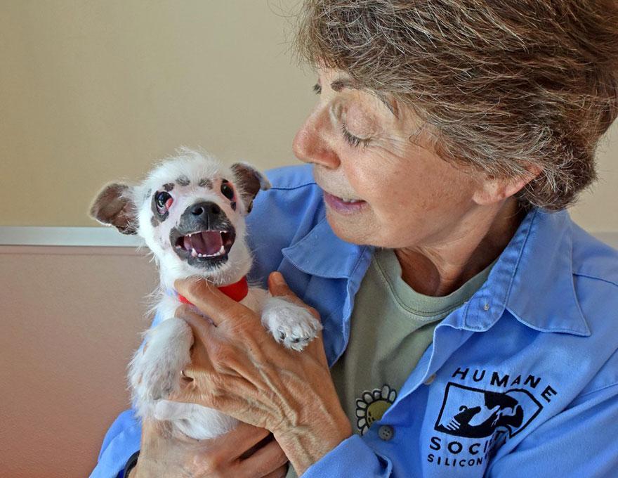 strange-puppy-lucky-hssv-adopt-christine-doblar-4