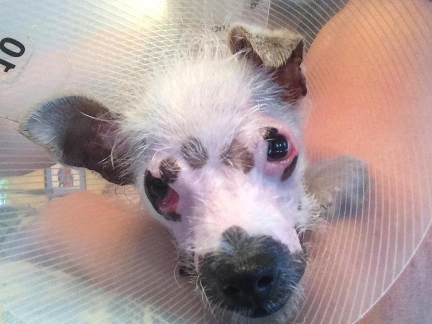 strange-puppy-lucky-hssv-adopt-christine-doblar-5