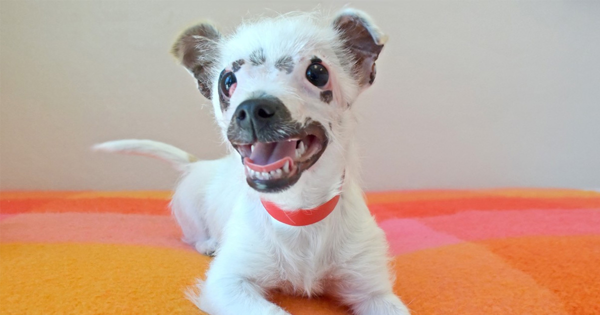 """""""Unusual Looking"""" Puppy Adopted By Family Who Didn't Care About Her Scars"""