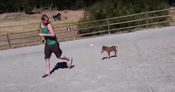 [Image: tiniest-miniature-horse-chasing-fb__700.jpg]