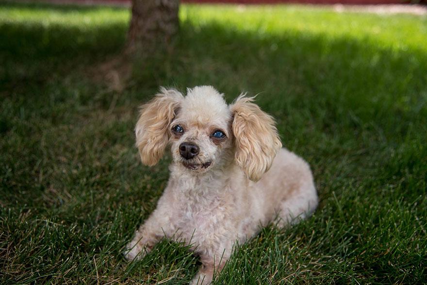 two-legged-rescued-dog-amaze-bobb-2