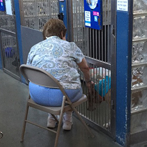 Woman Reads To Old Shelter Dogs To Make Them Feel Less Lonely