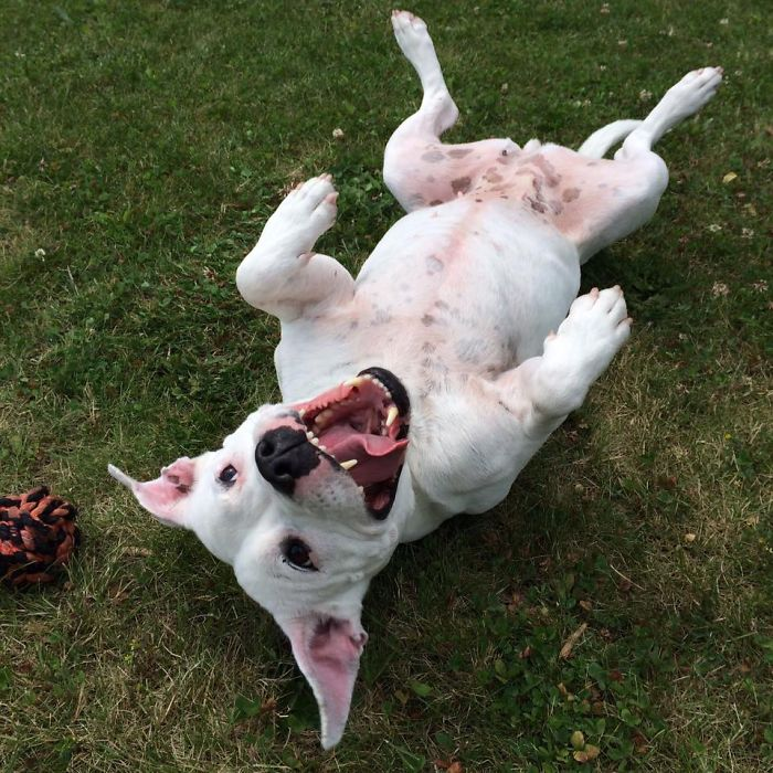 """Happy """"popi"""" Few Months After Being Adopted :) Wof!!!"""