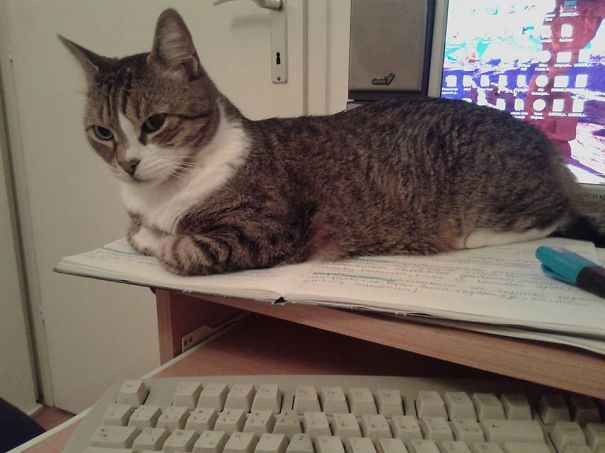 U Trying To Study?