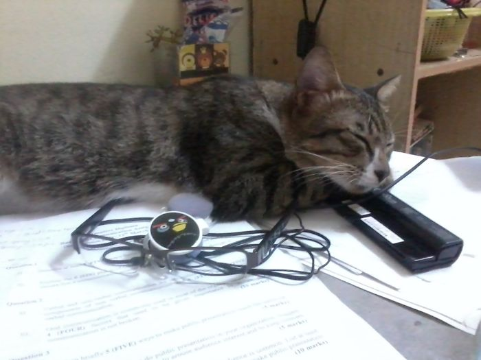 It's My Sleep Time Now, Feels Comfortable Under Your Assignment Paper