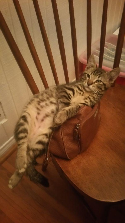 Logical Cat