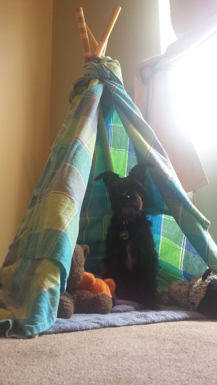 I Made This No Sew Easy Peasy Pet Teepee Out Of An Old Shower Curtain, Twine, And Dowels!