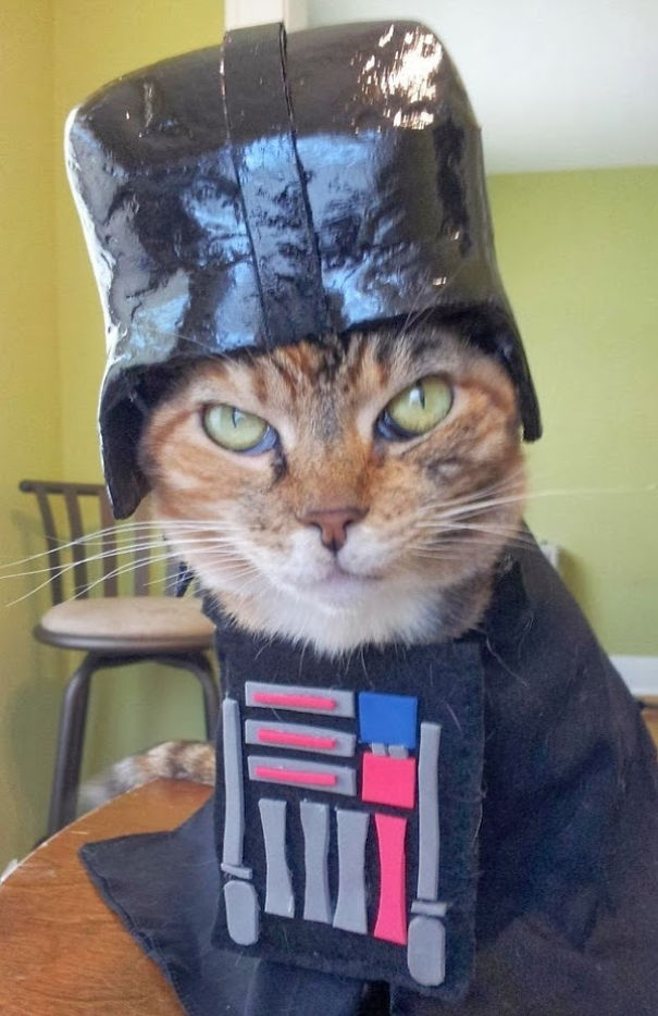 Darth Vader & 23 Cats In Halloween Costumes That Wish This Holiday Never Existed ...