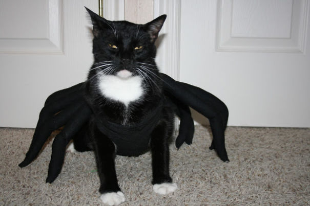 23 Cats In Halloween Costumes That Wish This Holiday Never Existed ...