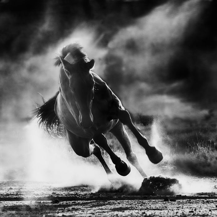 25+ Perfect Pictures Of Horses – Grace, Beauty And Strength
