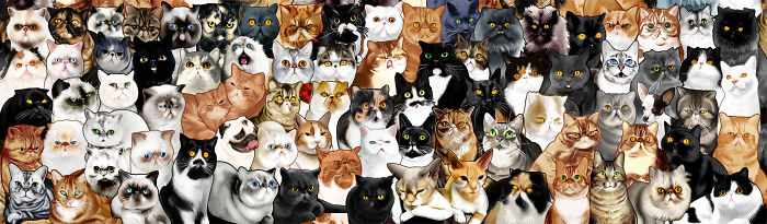 Cat Loving Artist Illustrates 78 Internet Popular Cats For A Collage